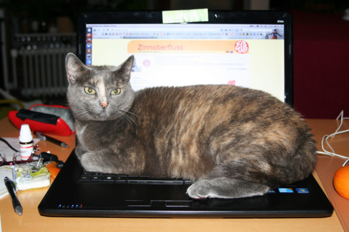 Katze sitzt auf der Tastatur