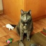 Katze mit Plüschmäusen