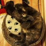 Katze Ginivra räkelt sich auf ihrem Lieblingsplatz
