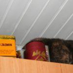 Katze zwischen Teedosen ganz oben auf dem Küchenschrank